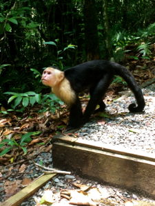 Manuel Antonio and National Park Travel Guide