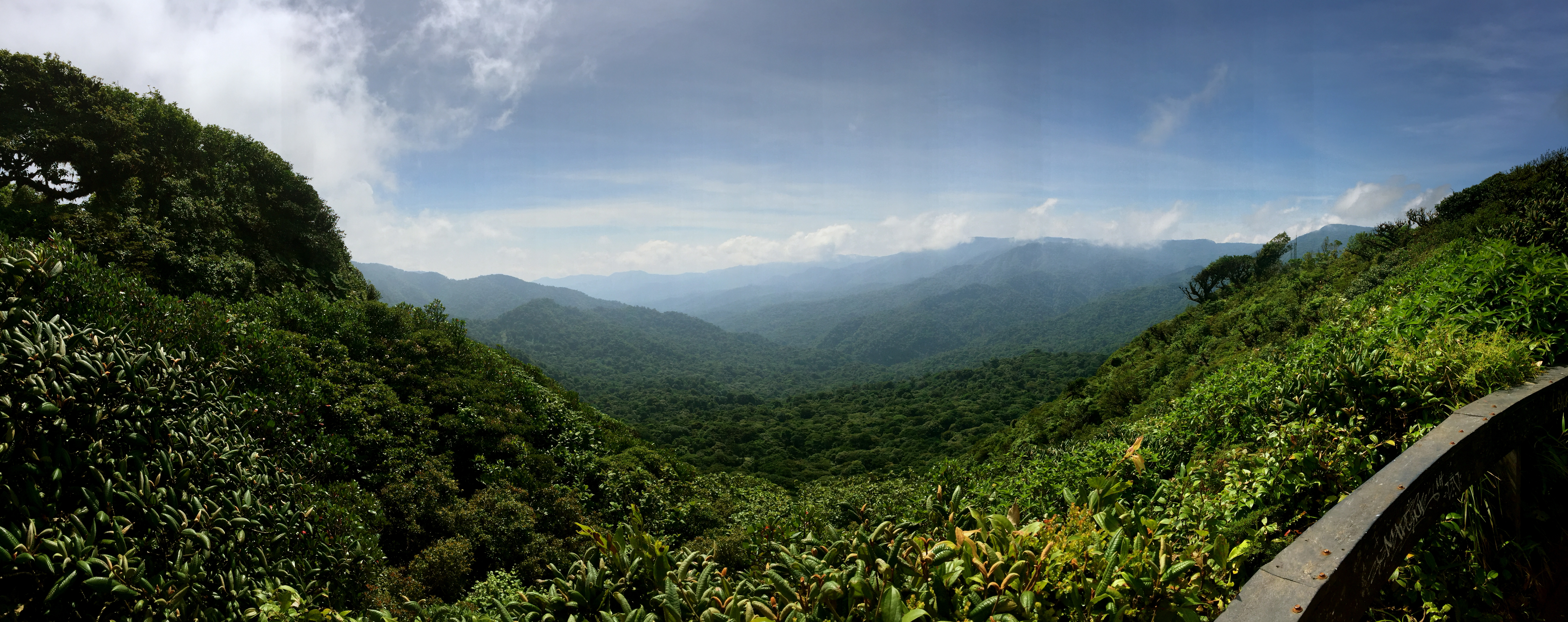Ultimate Travel Guide To Monteverde Cloud Forest